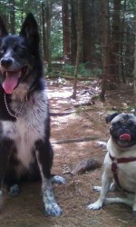 Sasha, a husky mix, sitting side-by-side with Olive, a pug, in a forest clearing