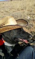 Black Lab in a cowboy hat sits in the sun