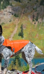Grey speckled cattle dog stands on rock with lake and mountain in background