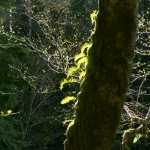 Capturing the light was an important thing to LuAnne Armstrong as she photographed in the forest.