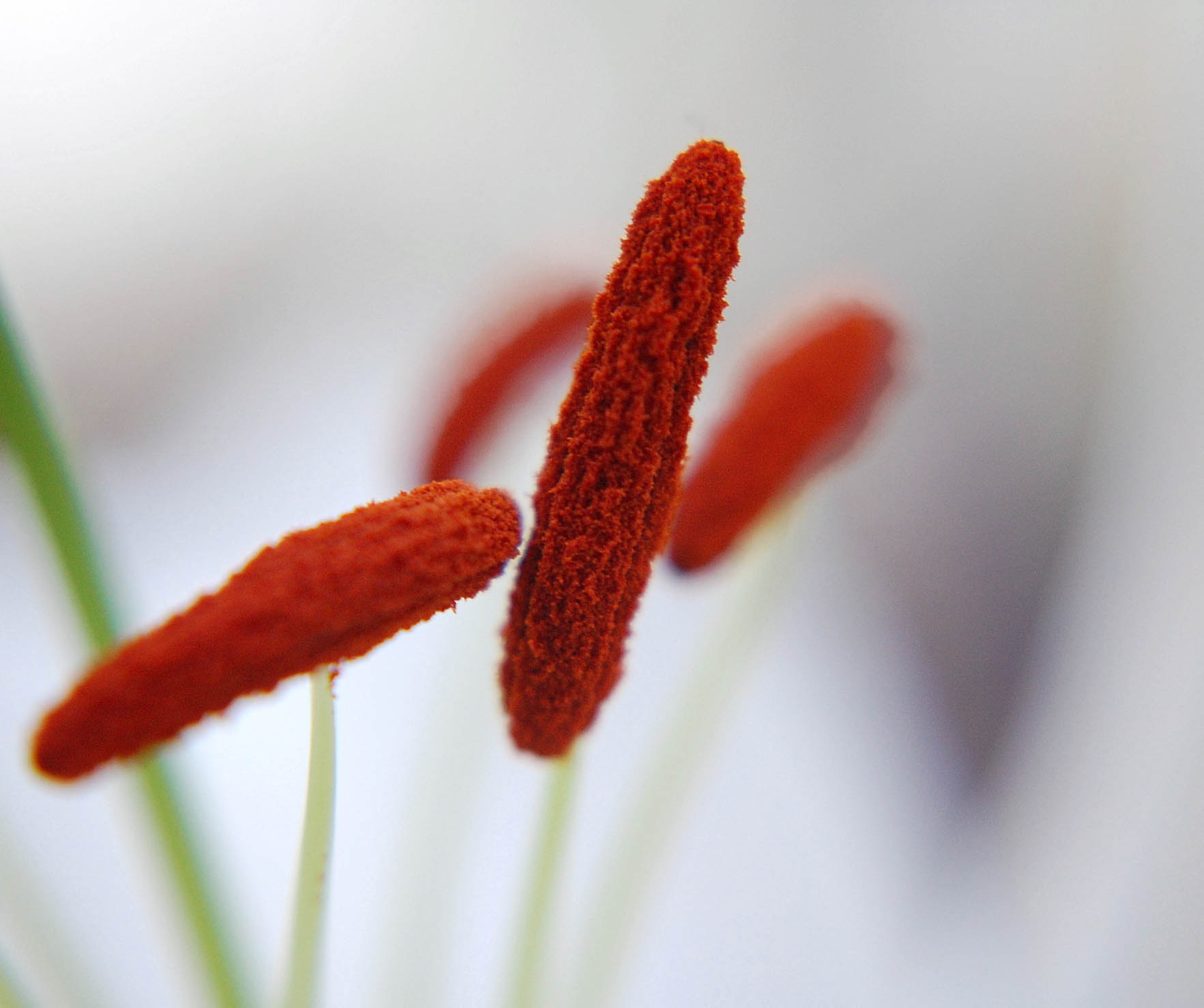 Keep control of your allergy asthma symptoms uw news pollen on lily stamens izmirmasajfo