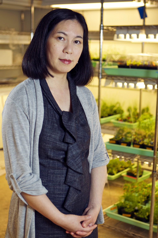 Keiko Torii