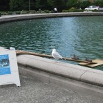 """The sign says """"Make way for ducklings,"""" but this week it was baby sea gulls, contentedly lazing on the ramp and growing chubby."""
