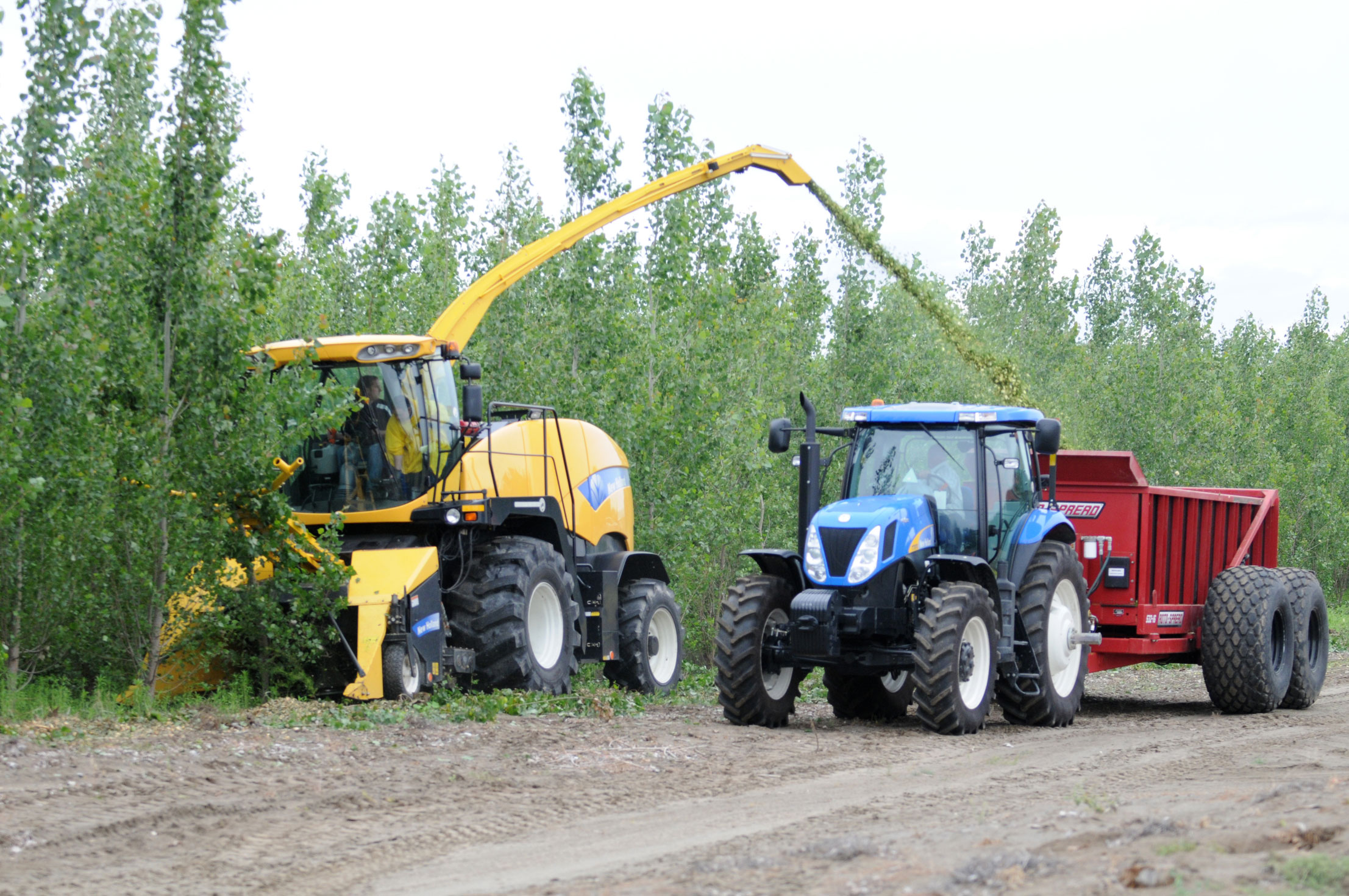 The University of Washington-led project focuses on producing bio-based fuel using feedstock from poplar plantations, such as these being harvested in Oregon on land managed by GreenWood Resources, a key industrial partner on the grant.