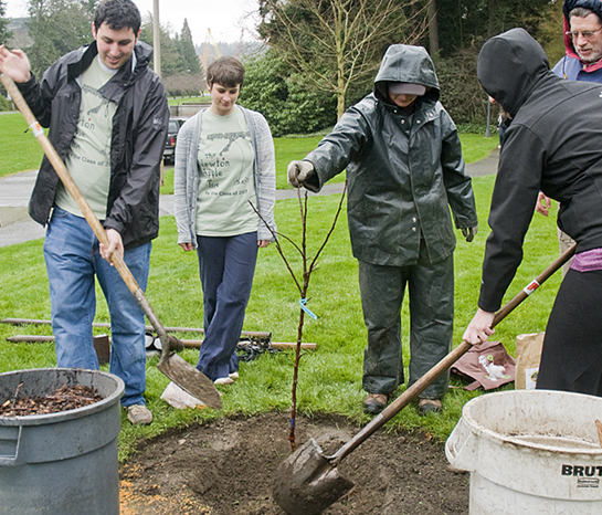 Volunteer to help plant trees on campus.