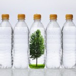 Bottles with Tree
