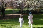 Two children among cherry trees in the Washington Park Arboretum.
