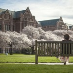 Cherry blossoms in the UW quad.