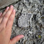 person's hand on beach