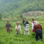 Karo Batak women at work