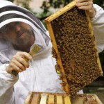 Evan Sugden, a UW biology instructor, got funding to support a beekeeping class and a campus hive.