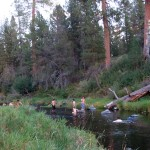 STudents swim in forest stream