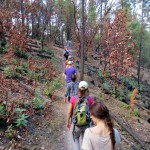 Students hike through forest