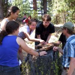 Students examine log cross section