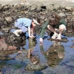 Two people kneel by tide pool
