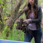 Woman tosses blackberry root ball into wheel barrow