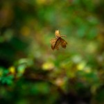 Bajorek_Joan_Falling Leaf