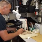 researcher looking into microscope
