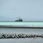 A herring fishing boat.