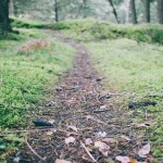 image of a wooded path