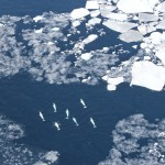 aerial view of whales surrounded by ice