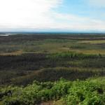 The landscape surrounding a thaw bog in Alaska