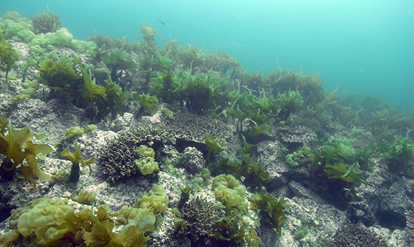 Coral reefs shifting away from equator, new study finds