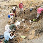 一群在蒙大拿挖掘化石的人