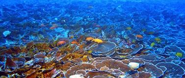 Mesophotic coral reefs