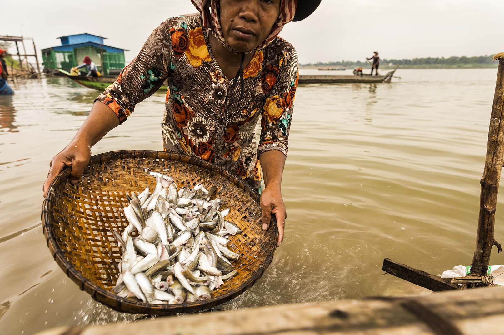 A woman washes scaled fish on the Mekong River in Cambodia, where UW researchers from the College of the Environment, College of Engineering and School of Public Health investigate the influence of environmental changes on the future of food security. (Photo by Mark Stone)