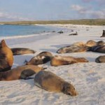 Galapagos_Sealionsonthebeach