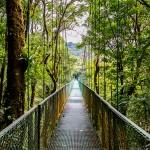 Canopy suspension bridge, Costa Rica