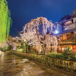 Kyoto, Japan, with cherry trees in bloom