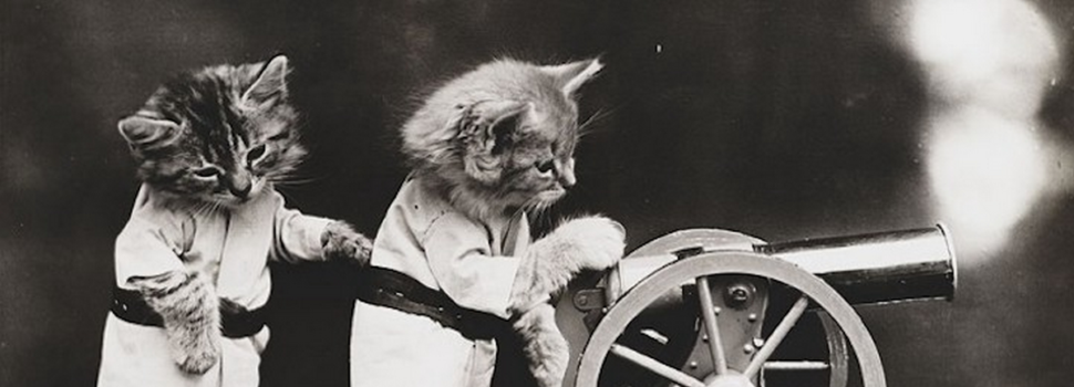 Crimean Tom, Rocket Cats and the Felines of War