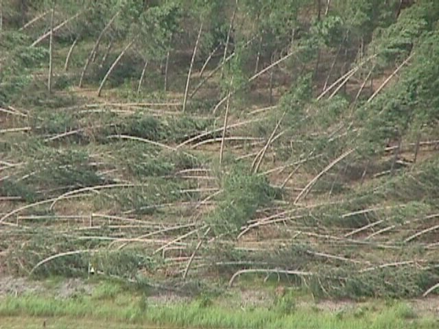 Downsburst damages in northwest Monroe County, WI. Photographed 27 July 1998. Retrieved from Wikimedia Commons. Author: Todd Shea, La Crosse National Weather Service Office