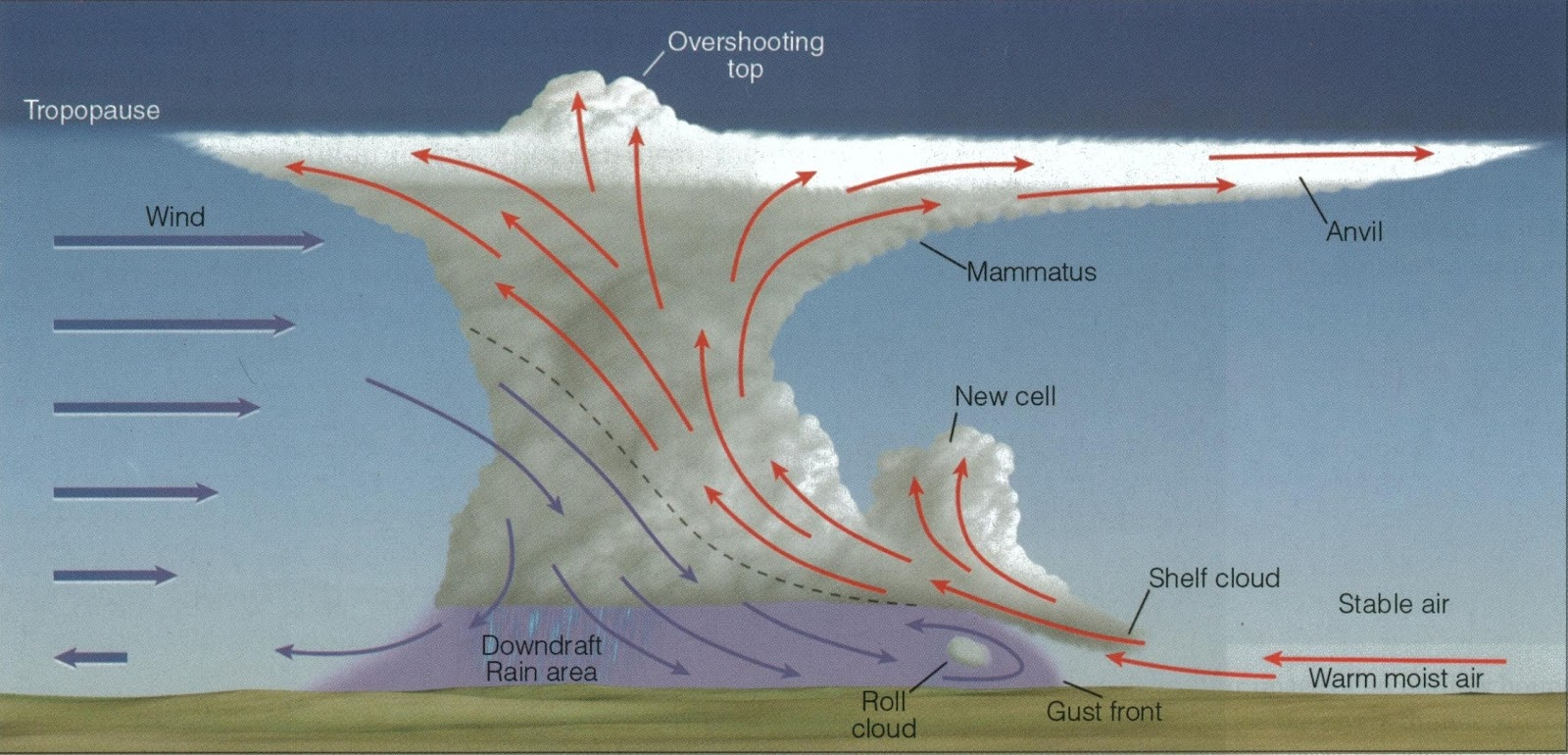 Diagram of a typical thunderstorm. Retrieved from gotoknow.org.