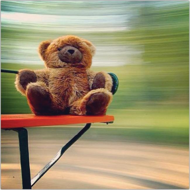 Un oso de peluche en calecita