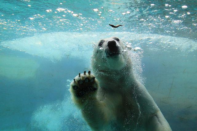 Bear In water Nonhoi Park (Aichi-Japan)