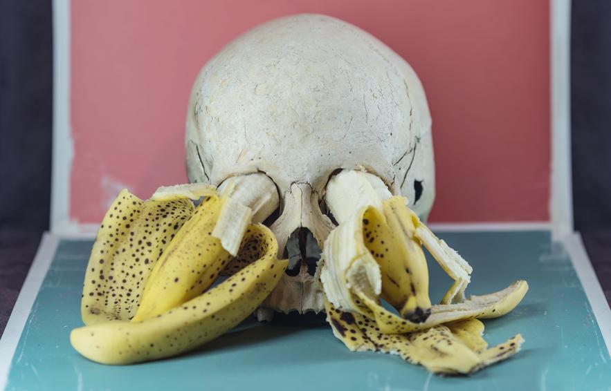 Weird stock photo: skull and bananas