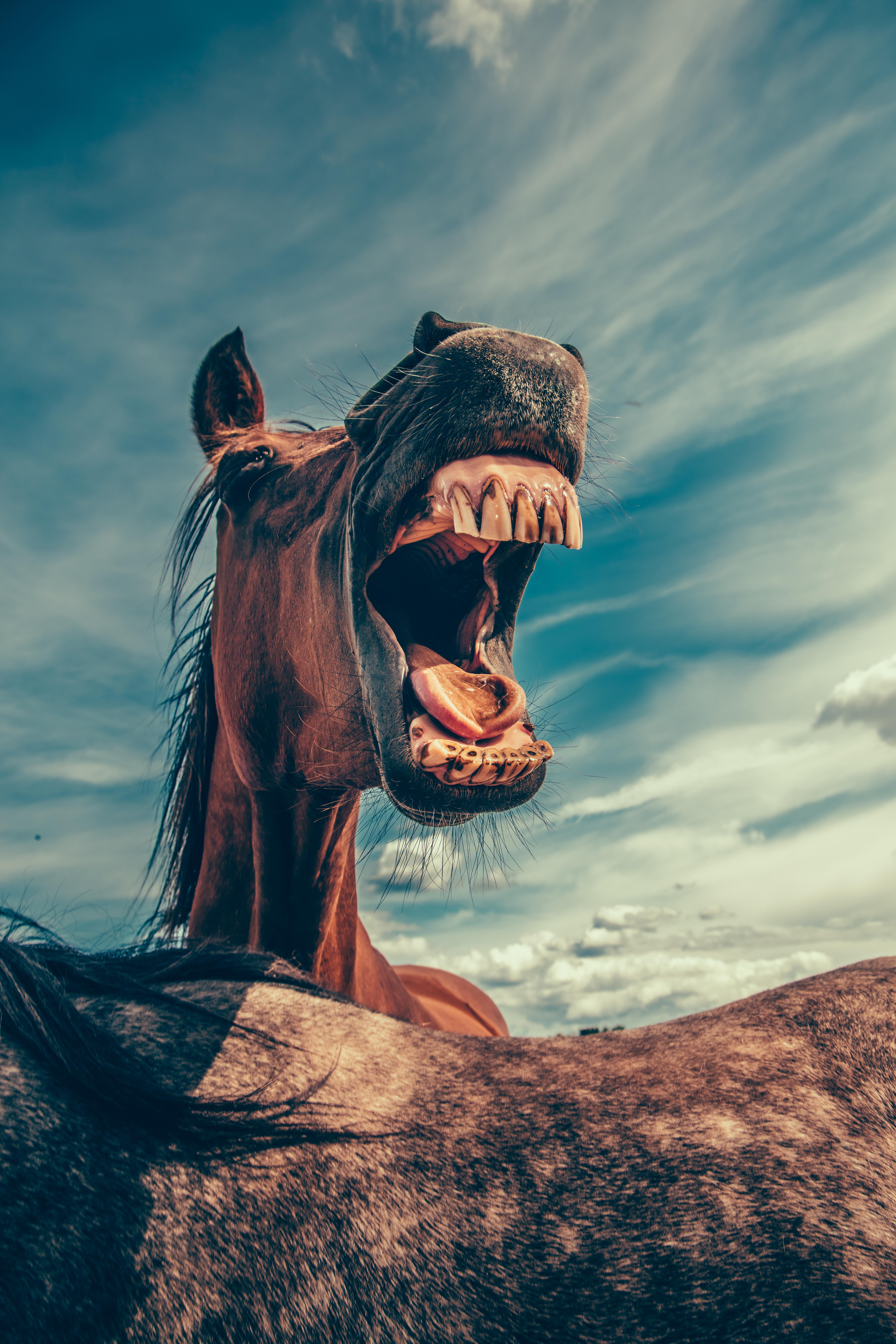 Weird stock photo: screaming horse