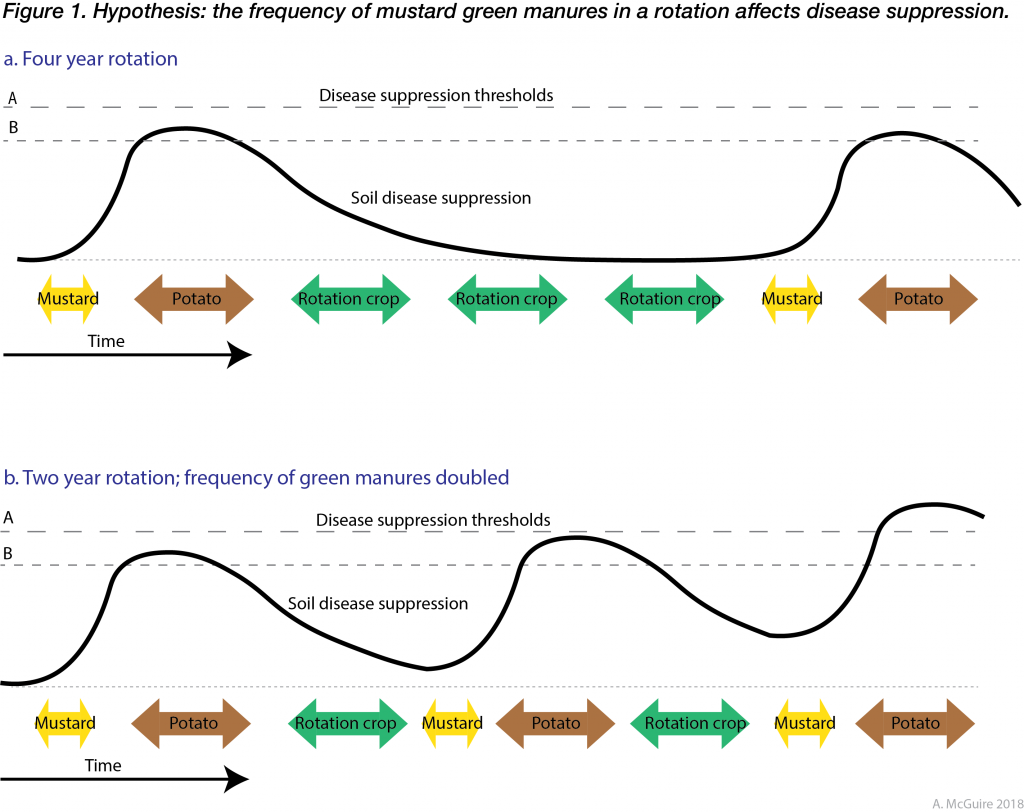 Two part diagram showing hypothesized disease suppression resulting from mustard green manures. Diagram described within text