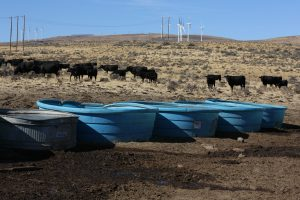 sagebrush steppe with windmills in the background, cattle in the mid-ground, and water tubs in the foreground