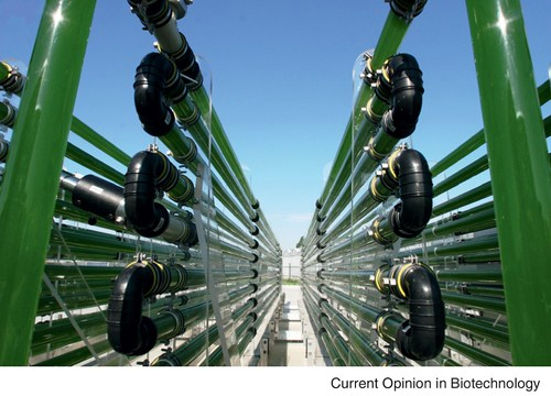 Loops of clear pipe stacked vertically in a bioreactor.
