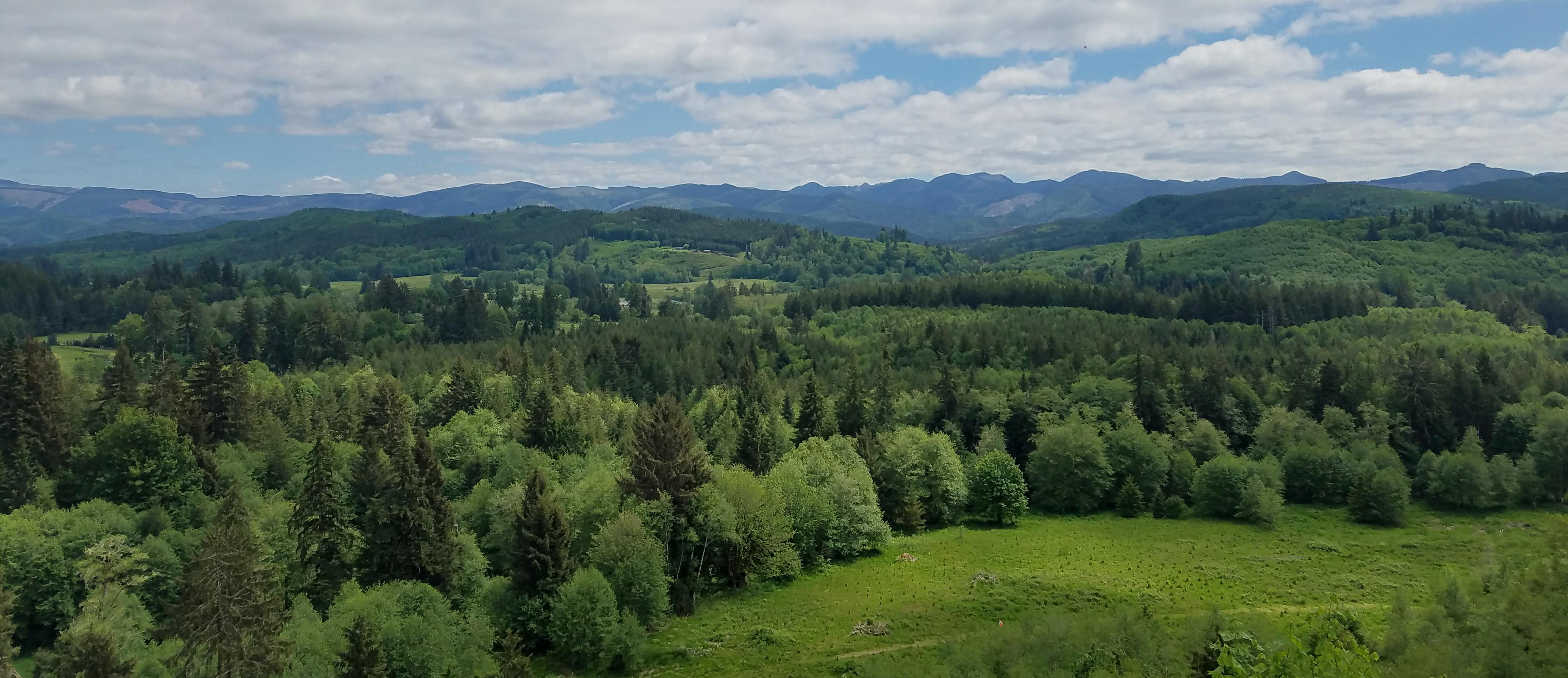 Scenic view of hilly forestland in western Washington