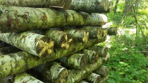 mushroom logs stacked