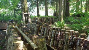 mushroom log field