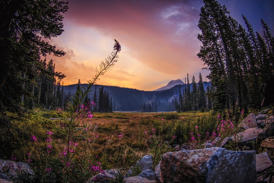 1859_Oregon-Postcard_April-11_Emily-Tidwell_Mt-Hood_960x640