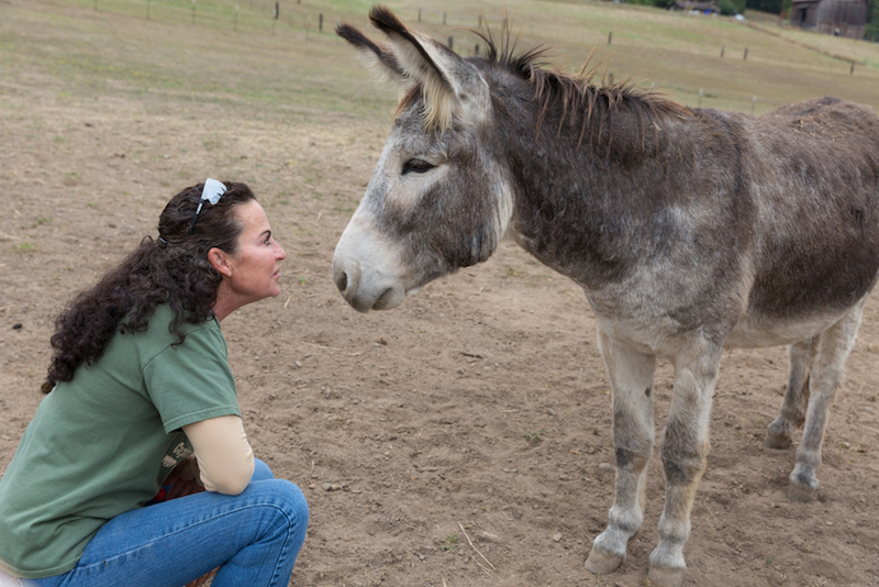 Peaceful Valley Donkey Rescue