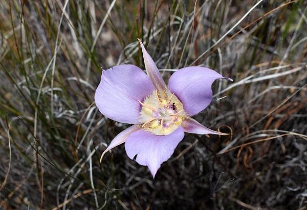 1859_wildflowers_stephanie_hinson_2