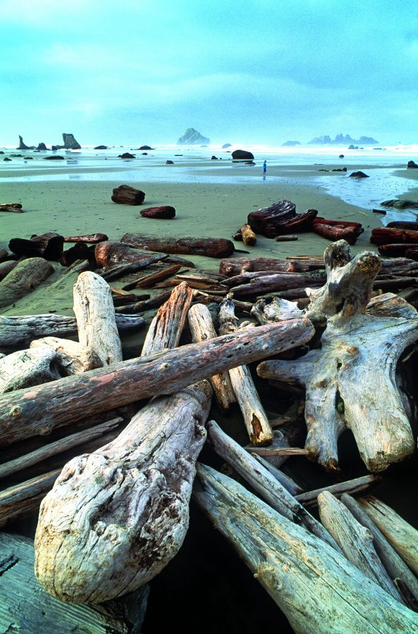 2010-Summer-1859-Oregon-Coast-history-bandon-oswalt-west-oregon-coast-driftwood